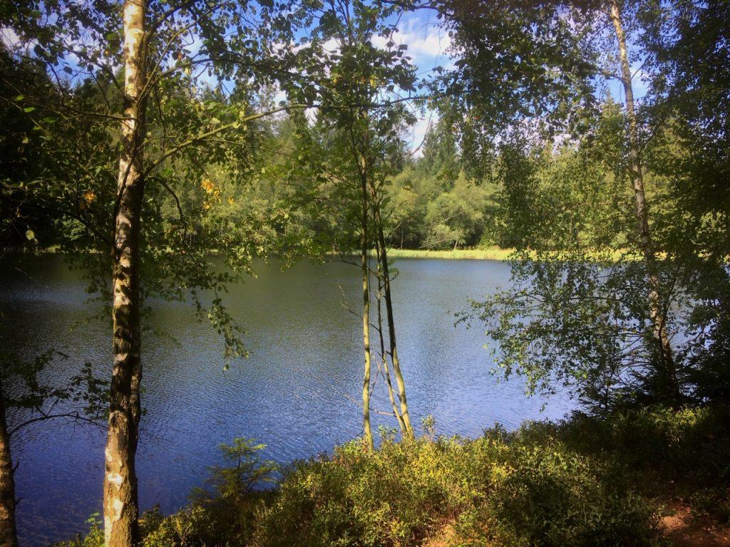 Erlebnisreiche Wanderung am 11.09.2019 über den Naturmythenpfad bei Braunlage
