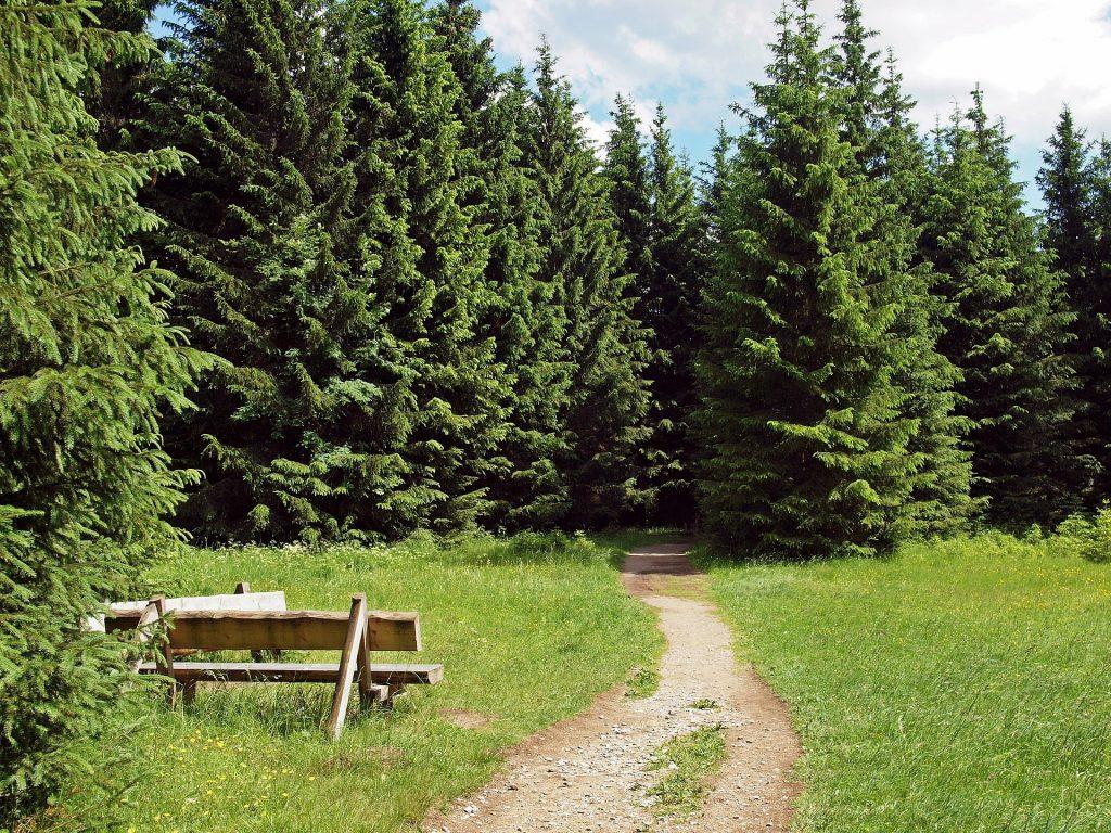 Wanderung am 11.09.2019 über den Naturmythenpfad bei Braunlage